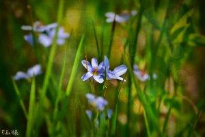 Pasture Flower
